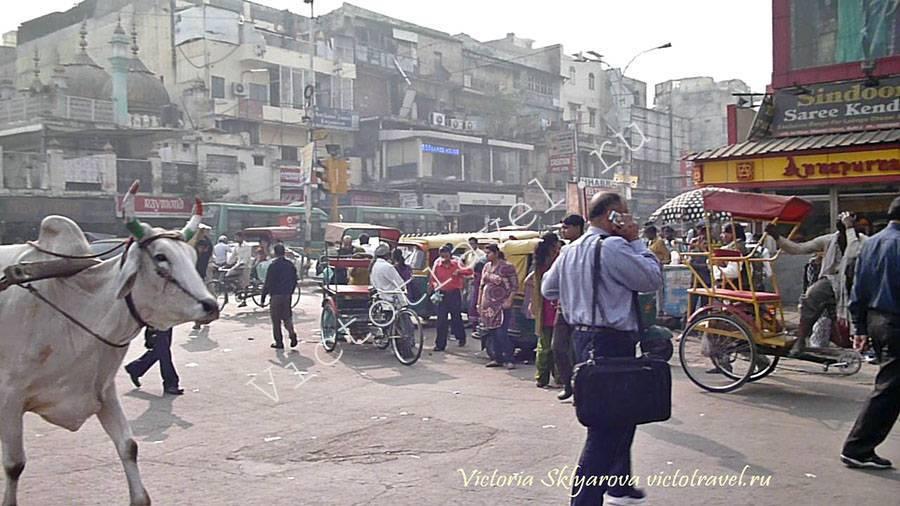 коровы, люди, рикши на улице в центре Дели, Индия