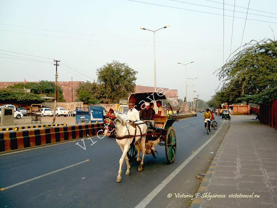 Туристическая повозка с лошадью в городе Агра, Индия