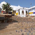 на ступеньках у священного озера в Пушкар, Индия
