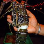 лобстер, омар в руках человека