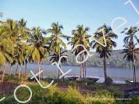 река, природа, фото из Арамболь в Пернем, Гоа