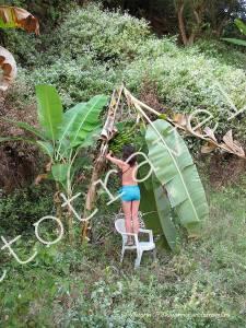 сломала банановое дерево
