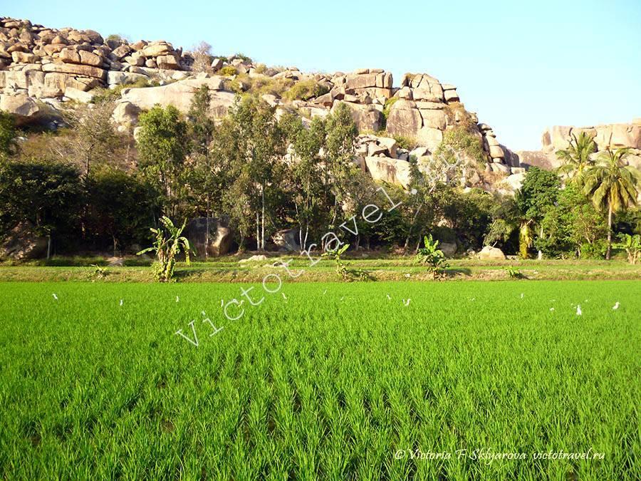 рисовые поля, горы, природа, Хампи, Индия