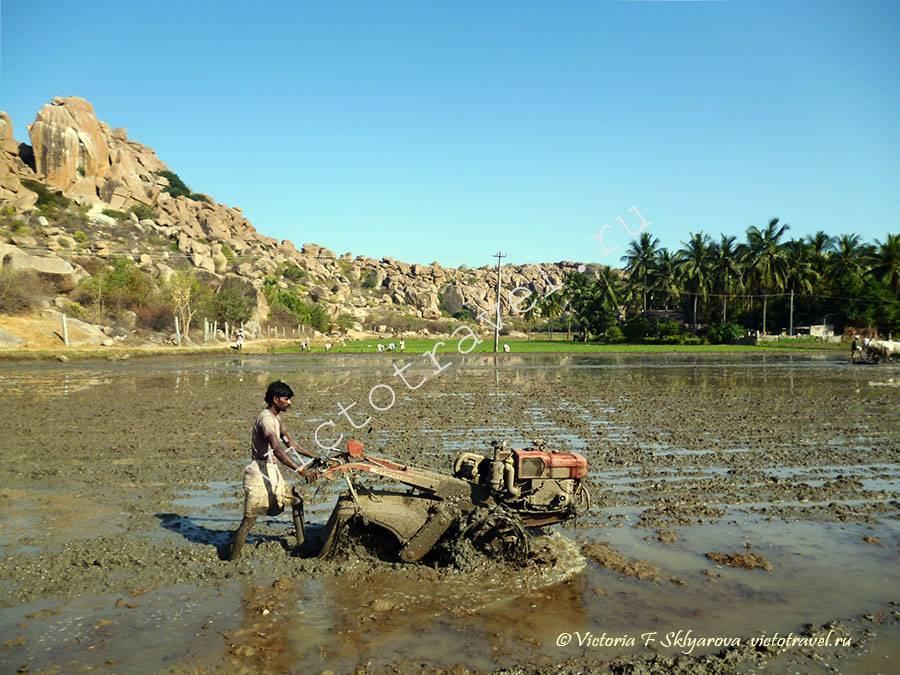 подготовка рисового поля, Хампи, Индия