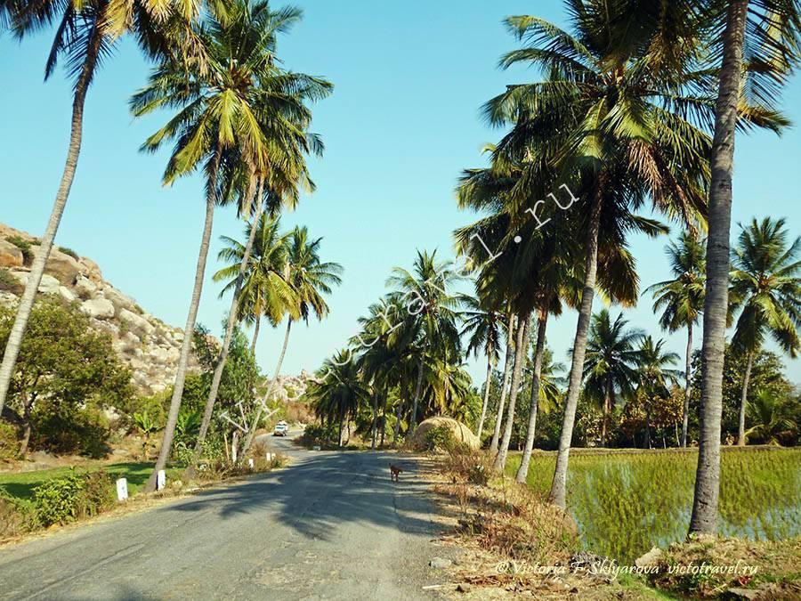 по дороге в храм Ханумана, Хампи