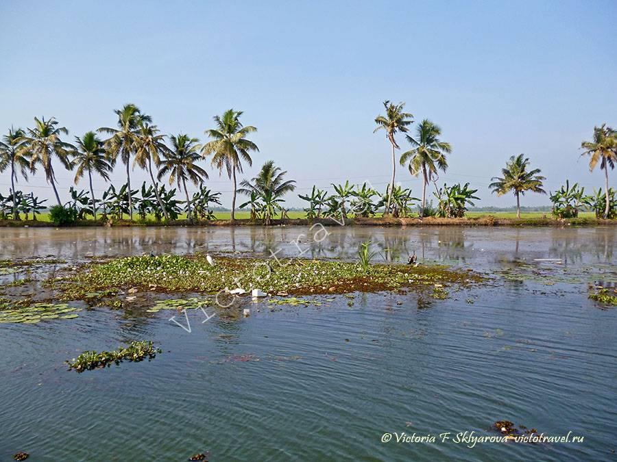 вода, птицы, природа, Алапуджа, Керала, Индия