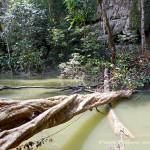 Гунунг Мулу-национальный парк, Борнео, Малайзия