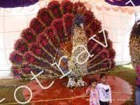 павлин из цветов в Бангалор 2012