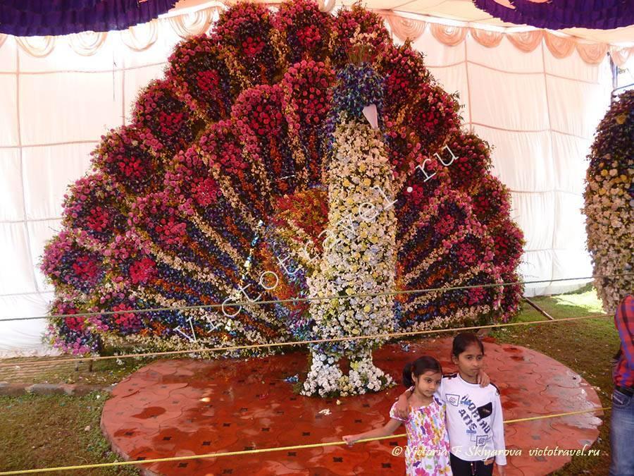 композиция из цветов, павлин, Бангалор, Индия
