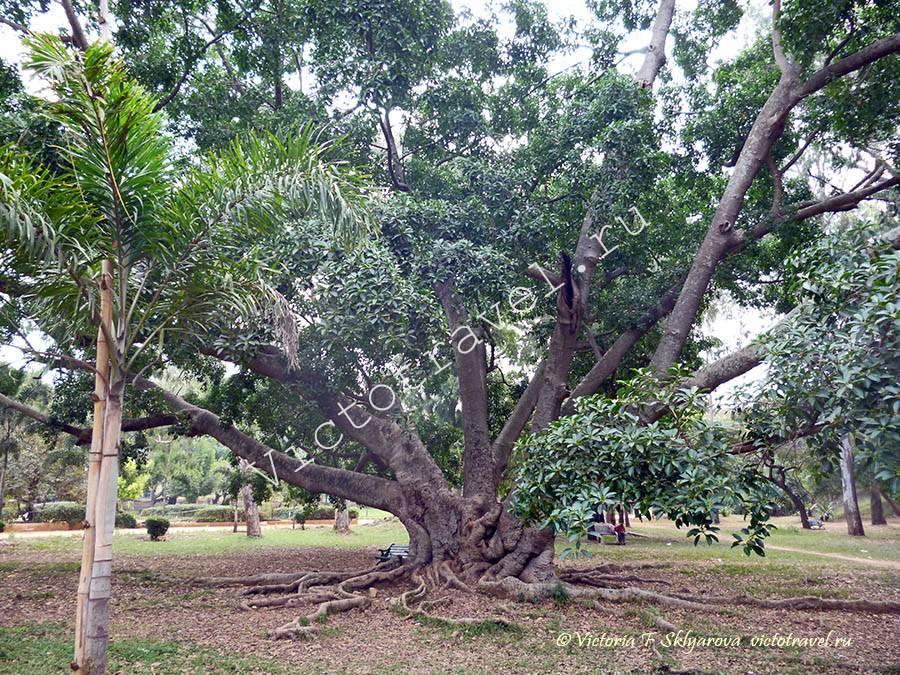 Ботанический сад, Бангалор, Индия