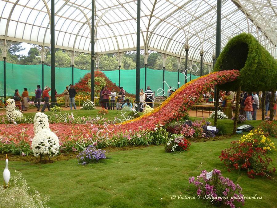 выставка цветов, Бангалор, Индия