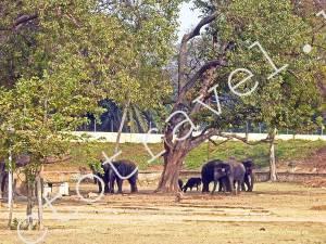 слоны Дворца Махараджи, Майсур, ИИндия