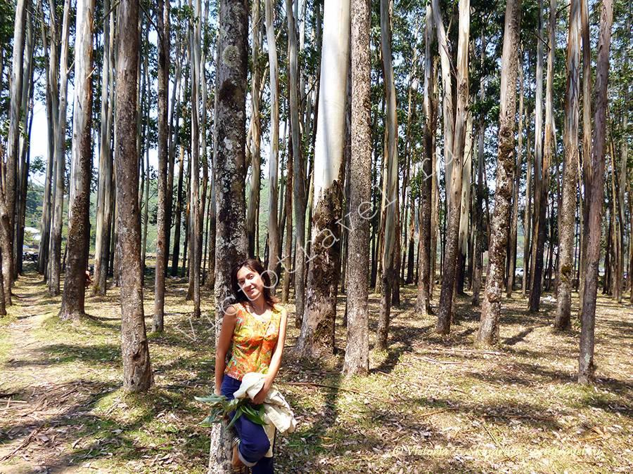 я в эвкалиптовом лесу, Муннар Керала Индия