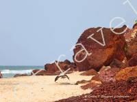 южный клиф, пляж, море, Варкала, Индия