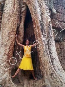 корни дерева в Та Прохм, Сием Рип, Камбоджа