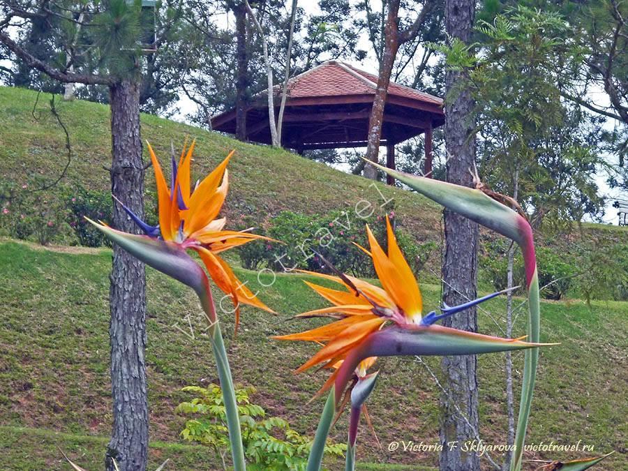 Парк цветов, Далат, Вьетнам
