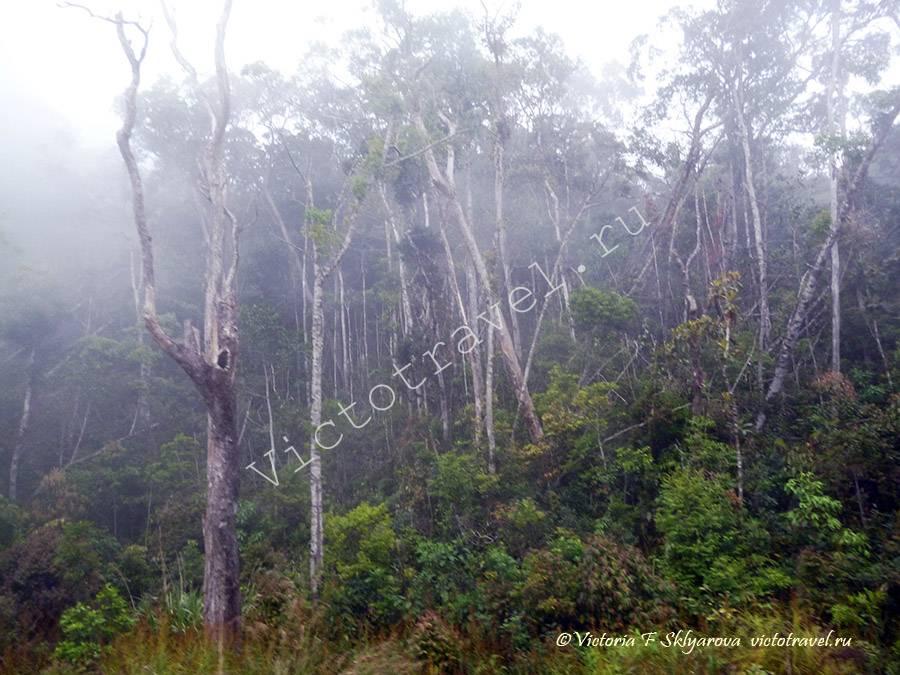 вьетнамские джунгли, из Далата в Нячанг