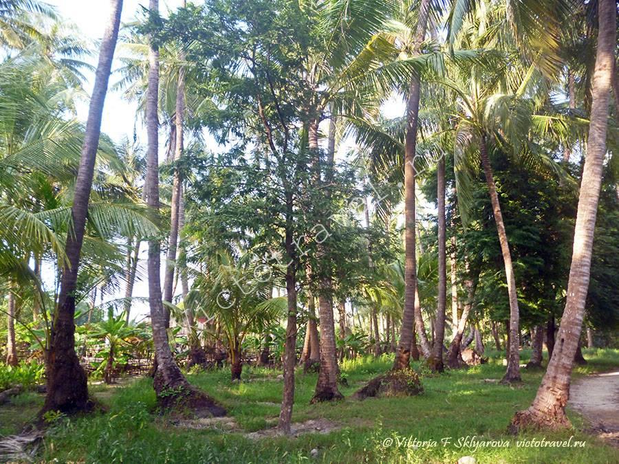 Пальмовый лес-ChawngTha76