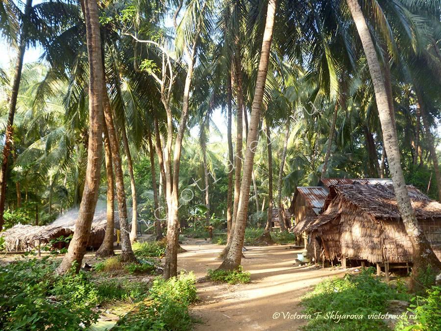 дома в пальмовом лесу, Мьянма