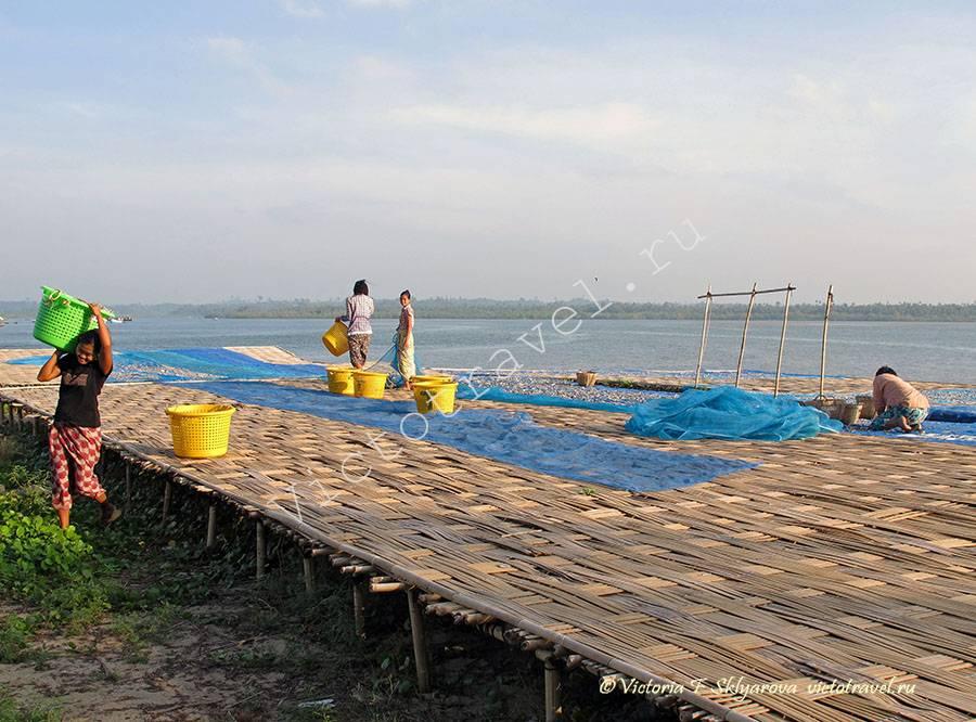 сбор и сушка рыбы, Мьянма