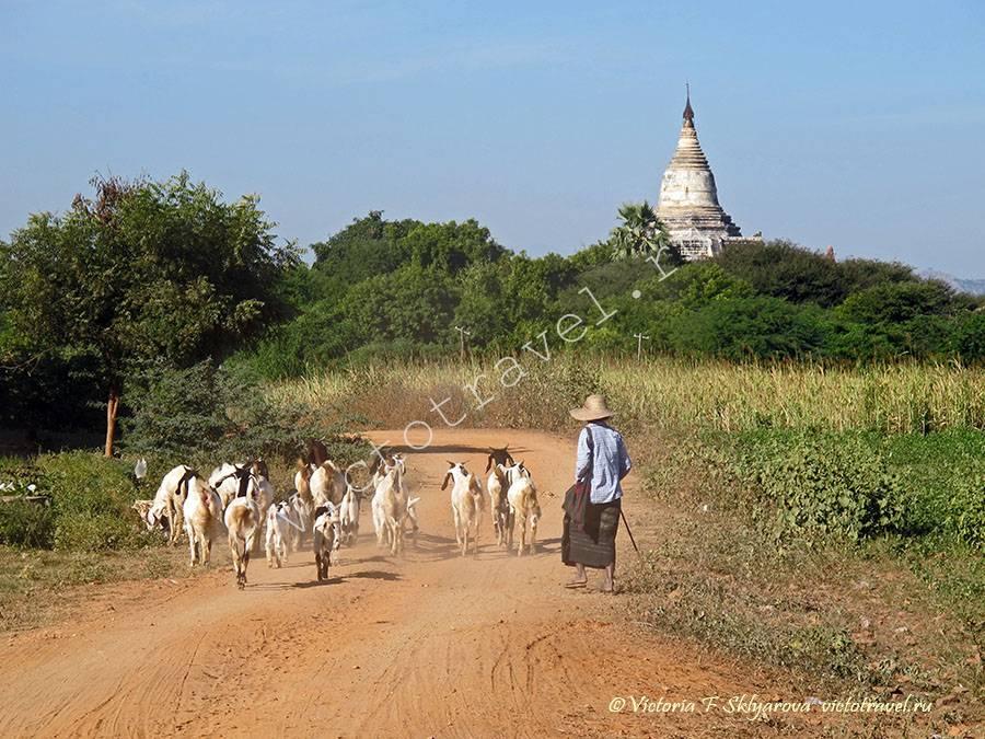 Bagan366