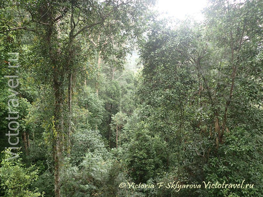 Влажный тропический лес, природа, Таман Негара, Малайзия