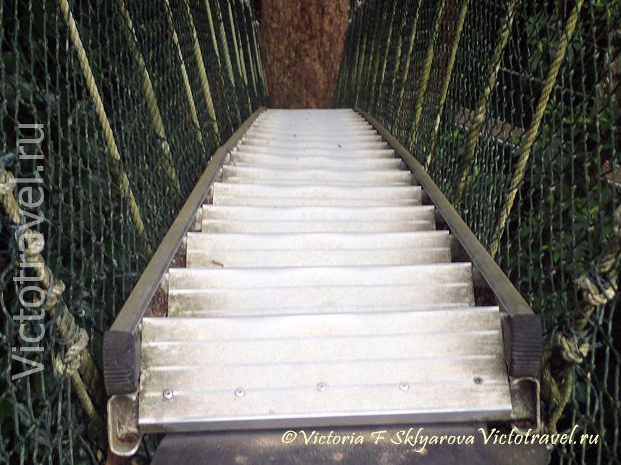лестница подвесного мостика в нац парке Таман Негара, Малайзия