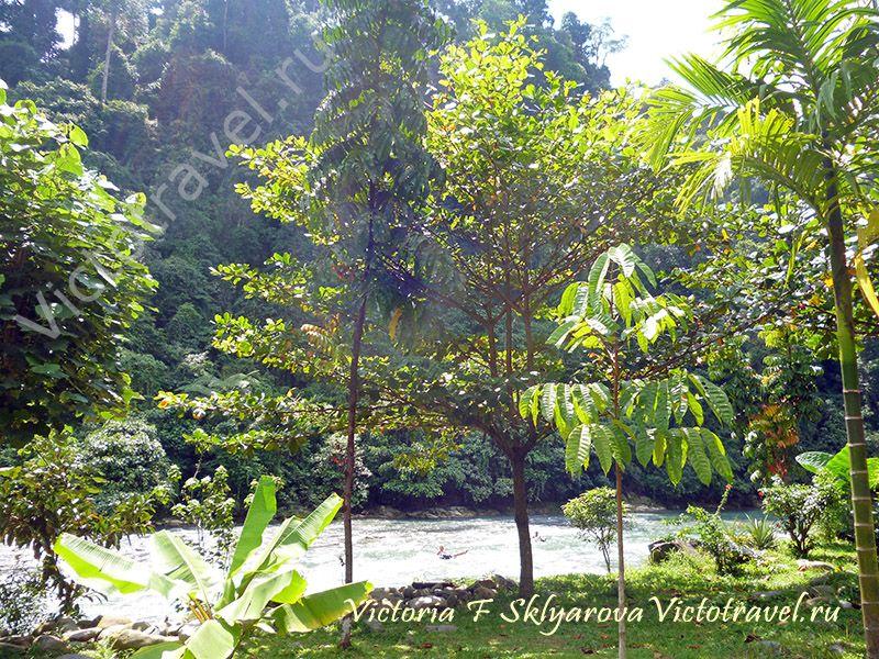 2013sumatra-bukit-lawang15-w