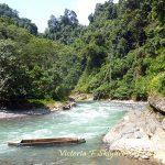 Букит Лаванг, Суматра, Индонезия