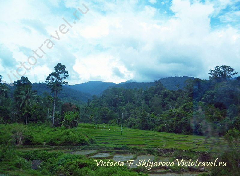 2013sumatra-bukit-tinggi13-w