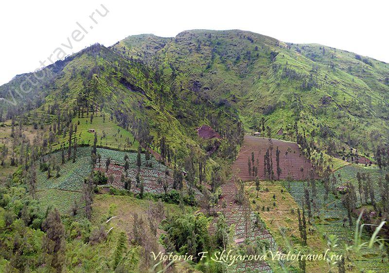 красивые горы, огороды, по пути на вулкан Бромо, остров Ява, Индонезия