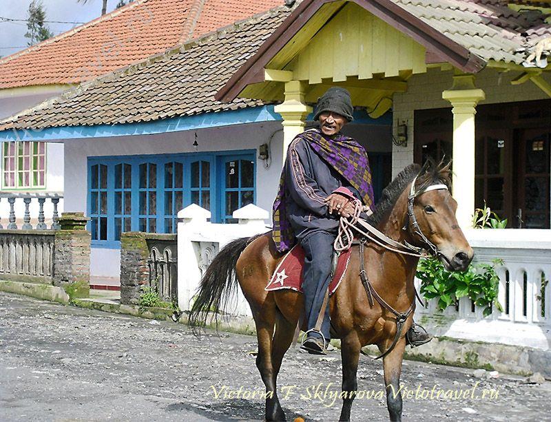 Всадник на лошади, пожилой Тенггер, Бромо, Ява, Индонезия