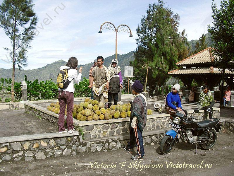 Продают дурианы, я выясняю цену у вулкана Бромо, Ява, Индонезия