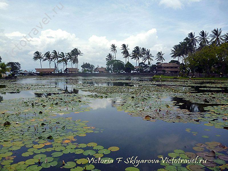 озеро, лилии, в Чадидаза, Бали, Индонезия