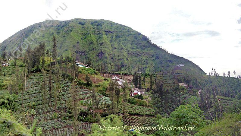 красивые виды, пейзажи, горы, огороды, по пути на вулкан Бромо, остров Ява, Индонезия