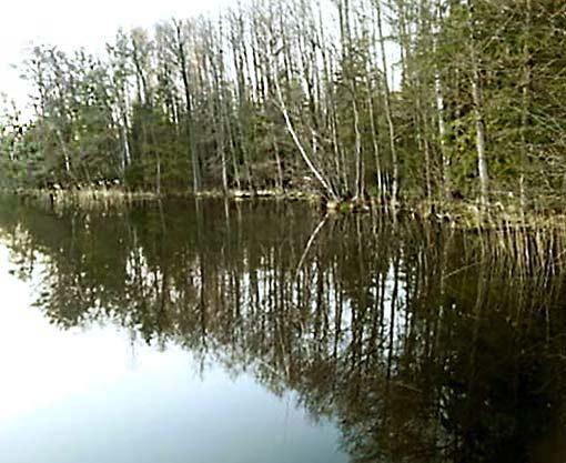 природа, красота, озеро, березы
