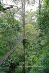Я и дерево в парке Мулу, Малайзия